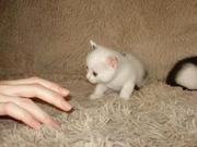 Отдам котят в хорошие руки_Хабаровск