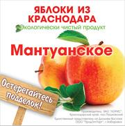Экологически чистый продукт Краснодарские яблоки