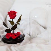 Роза в колбе Notta&Belle теперь и в Комсомольске-на-Амуре